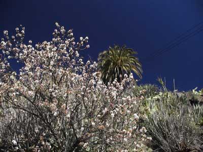 Wandern bei der Mandelblüte auf den Kanaren