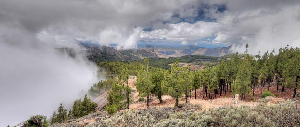 Kiefernwald und Passatwolken im Zentrum von Gran Canaria