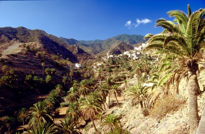 Palmenhain im Süden von La Gomera