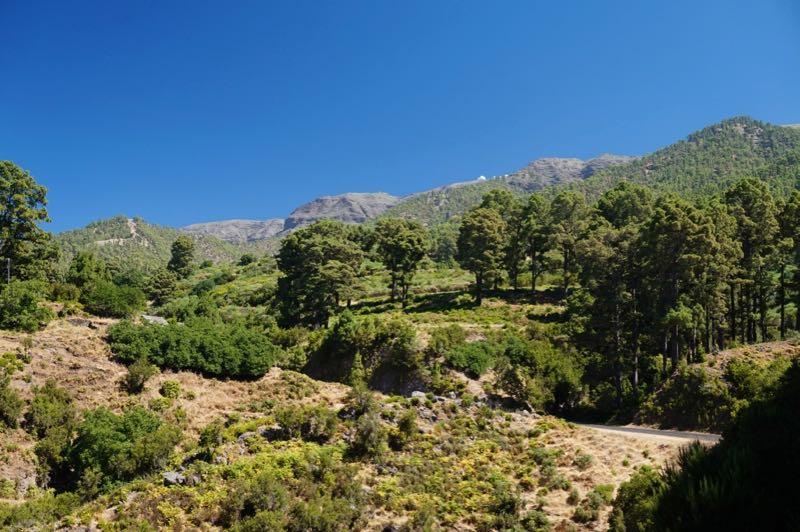 Kiefernwald im Norden von La Palma