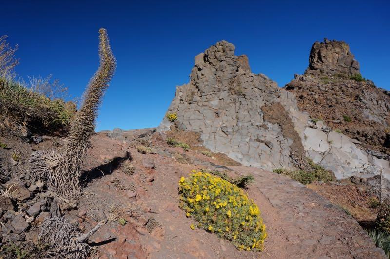 Roque de los Muchachos, La Palma mit abgeblühtem Natternkopf.